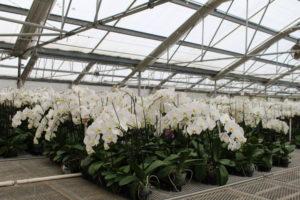 McLeUan Botanicals (Prunedale)